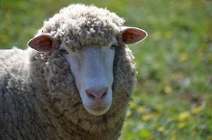 cropped-lamb2.jpg